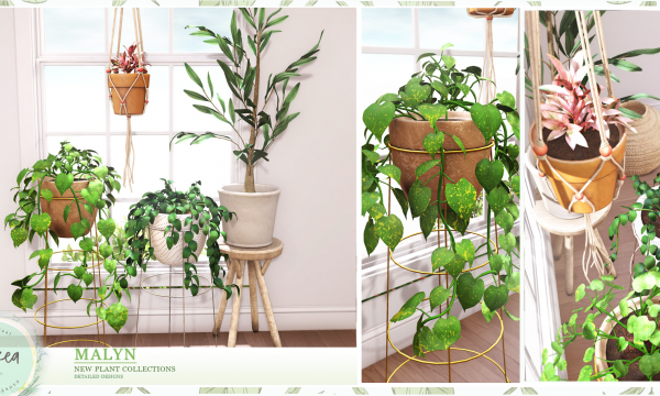 Malyn. Photos Plant 1 & 2, Olive Plant is L$189 each. Ficus Elastica Hanging Plant is L$159. Fatpack is L$599.