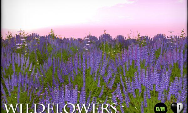 Heart Garden Centre - WildFlowers - Lavender.